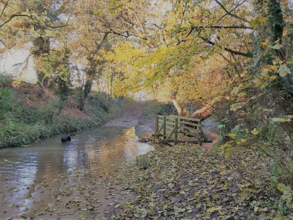 Beck in the autumn
